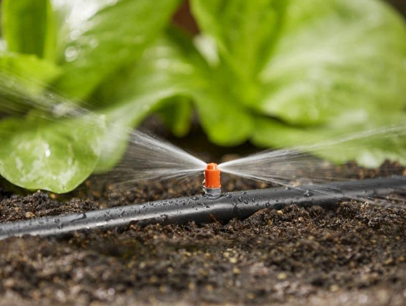 automatické zavlažovanie zeleniny v skleníku gardena